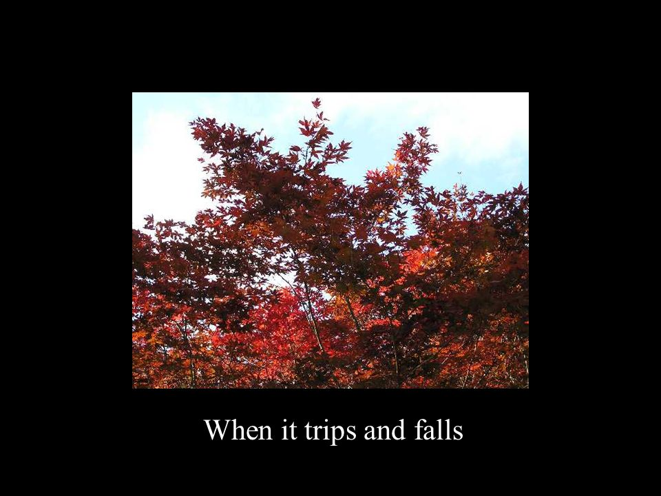 When it trips and falls