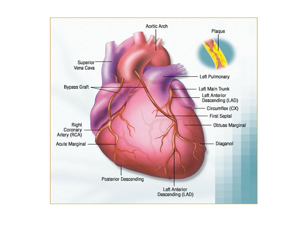 The Heart Normal And Abnormal Chest X Rays Blood Flow Through Heart