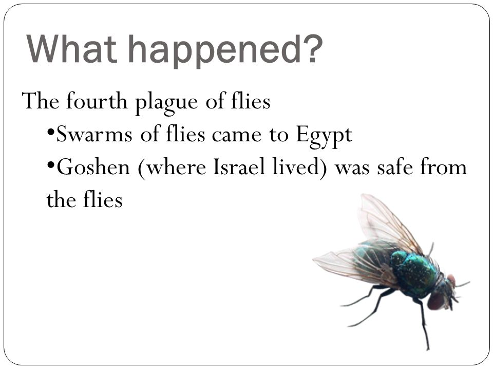 Why? Why would God send 10 plagues (disastrous events) to