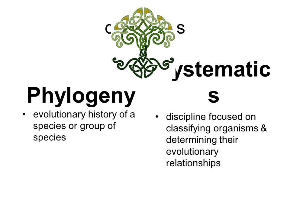 Phyogeny The Tree Of Life Represent Traits That Are Either Derived