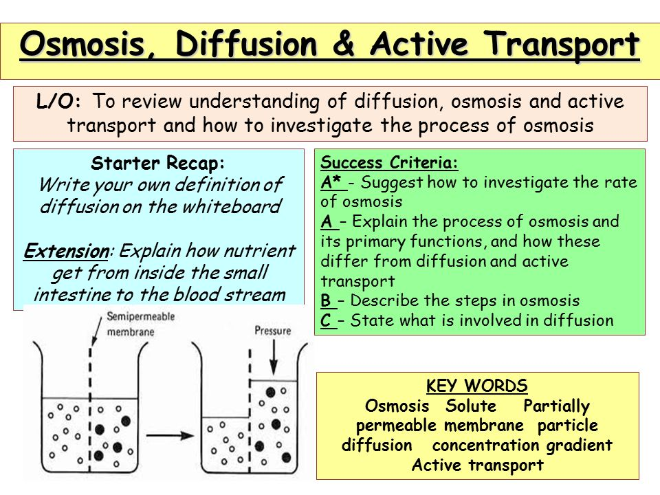 Diffusion Osmosis And Active Transport Diagram All Kind Of Wiring
