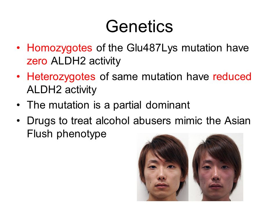 Are available? enzyme asians alcohol