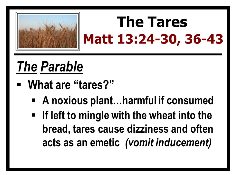 The Parable  What are tares  A noxious plant…harmful if consumed  If left to mingle with the wheat into the bread, tares cause dizziness and often acts as an emetic (vomit inducement) The Tares Matt 13:24-30, 36-43