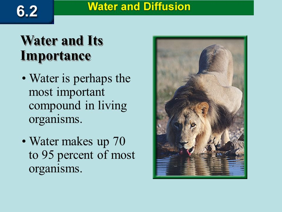 describe and explain the roles of water in living organisms