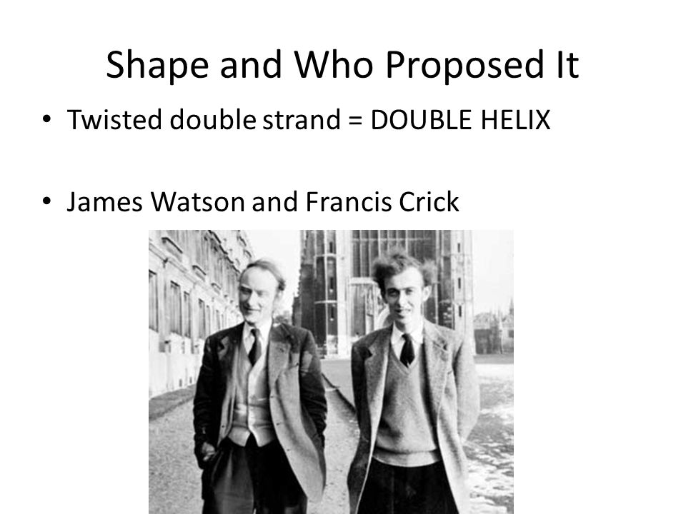 Shape and Who Proposed It Twisted double strand = DOUBLE HELIX James Watson and Francis Crick