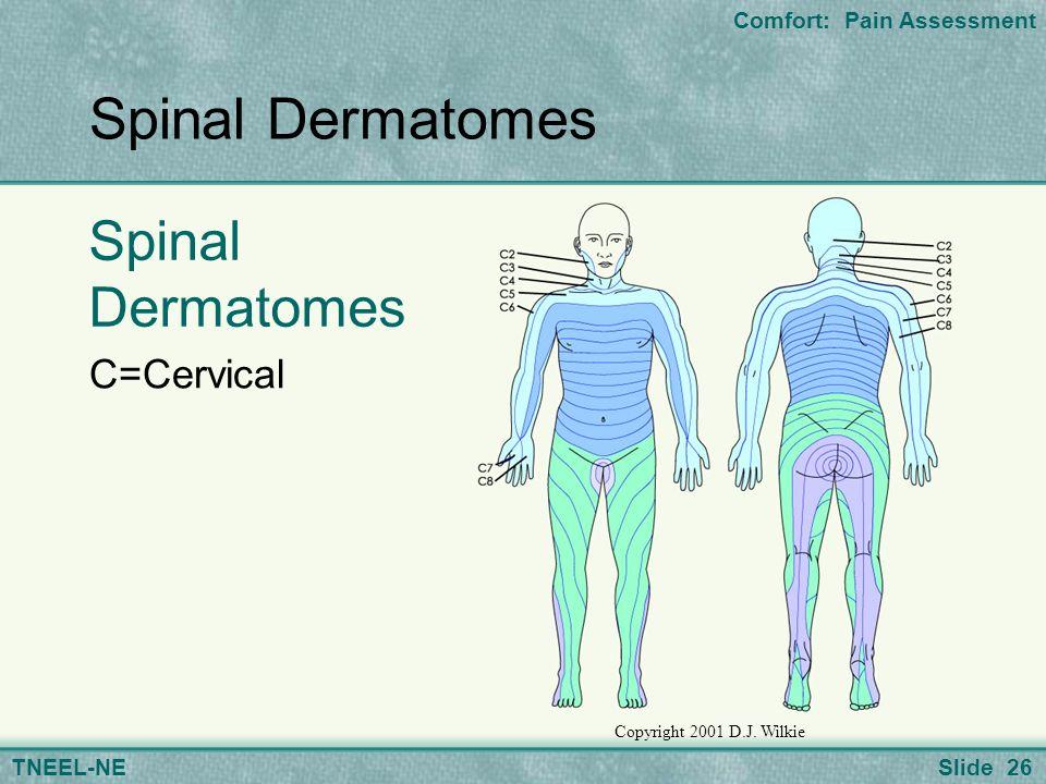 26 slide 26 comfort: pain assessment tneel-ne spinal dermatomes c=cervical  copyright 2001 d j  wilkie