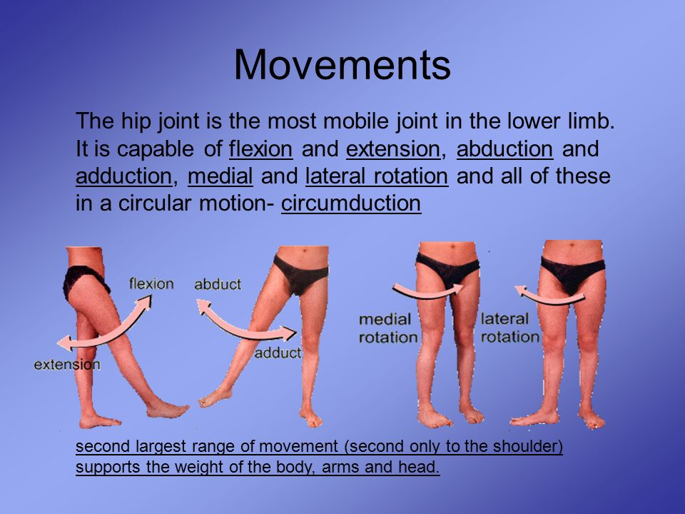 The Hip Joint Eq What Is The Structure Of The Hip Joint Ppt