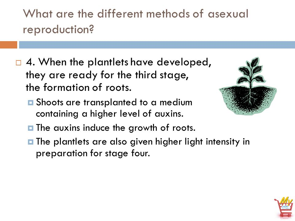 I m becoming asexual propagation