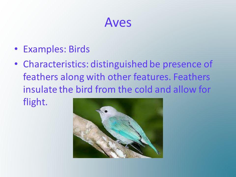 the seven vertebrate classes by olivia hindman agnatha examples