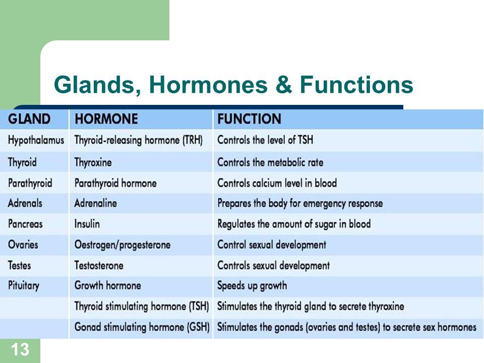 The Endocrine System 2 Contents Hormone Endocrine Exocrine Glands