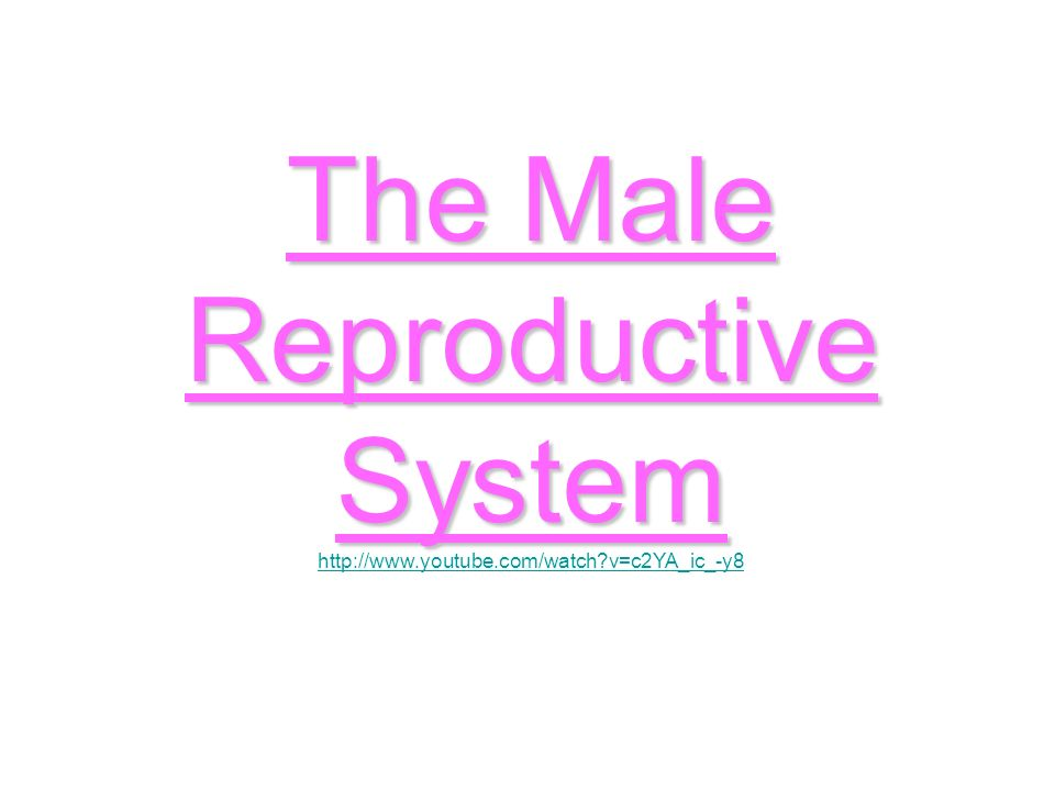 The male reproductive system ppt download 1 the ccuart Image collections