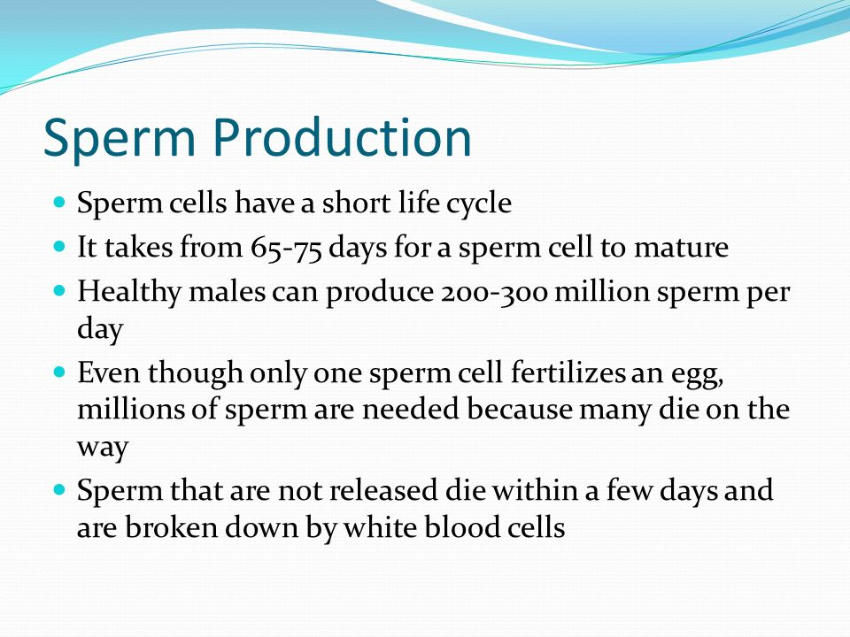 Can day man many per produce sperm — pic 14