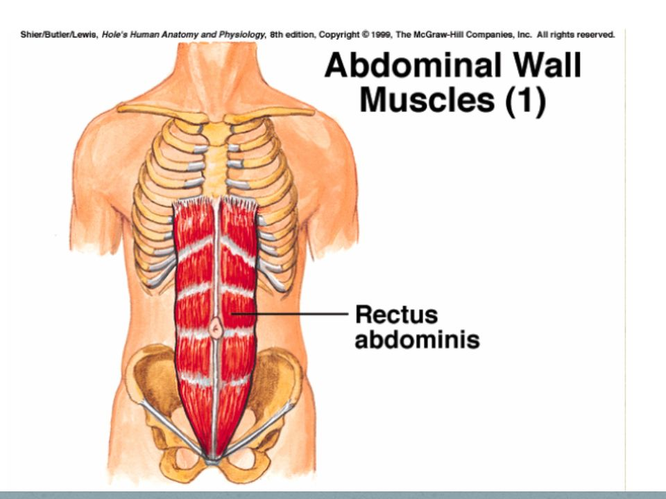 Naming Skeletal Muscles Human Anatomy And Physiology Ppt Download