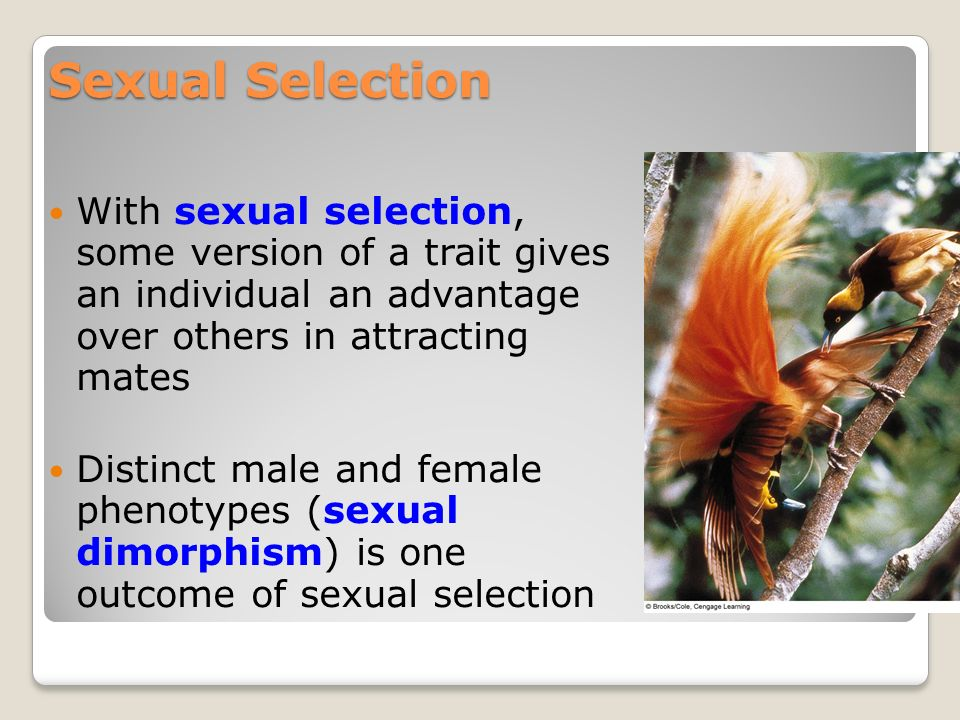 Sexual selection and evolution