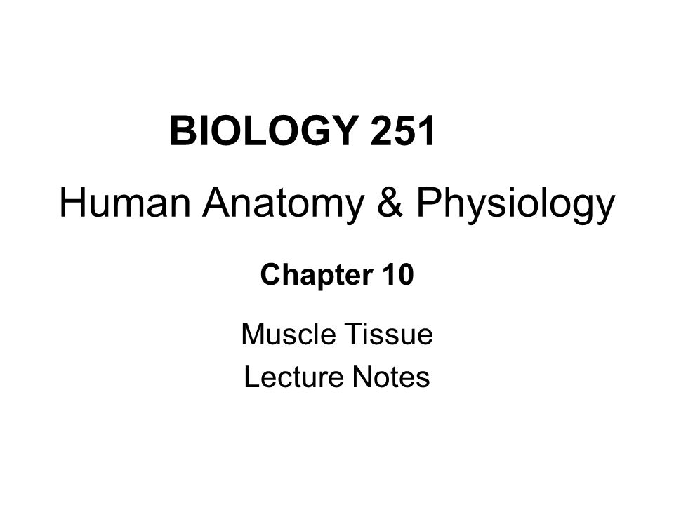 BIOLOGY 251 Human Anatomy & Physiology Chapter 10 Muscle Tissue ...