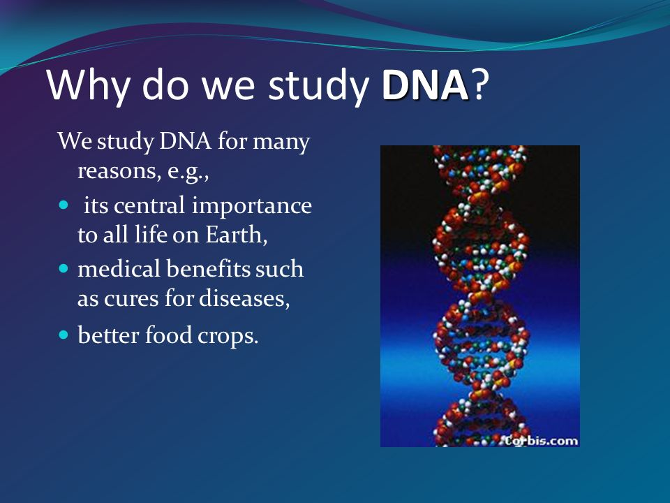 Dna dna dna is often called the blueprint of life in simple terms 3 dna dna dna is often called the blueprint of life in simple terms dna contains the instructions for making proteins within the cell malvernweather