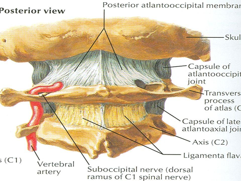posterior atlanto occipital membrane unguent cu artroza cotului
