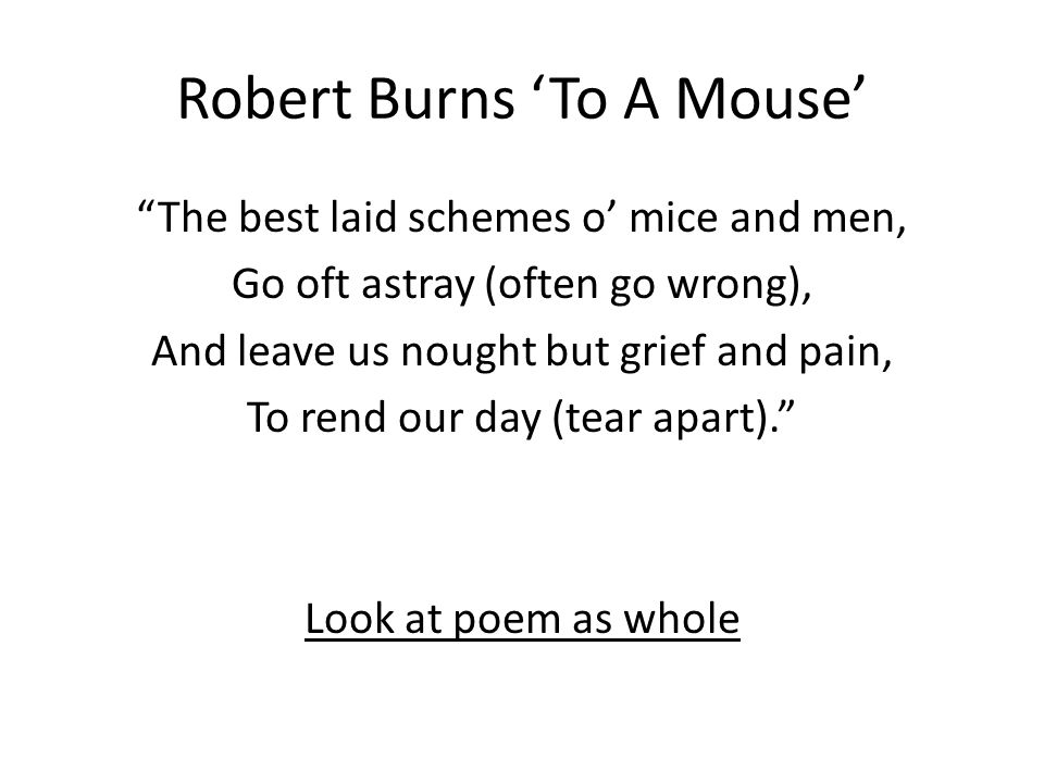 to a mouse of mice and men