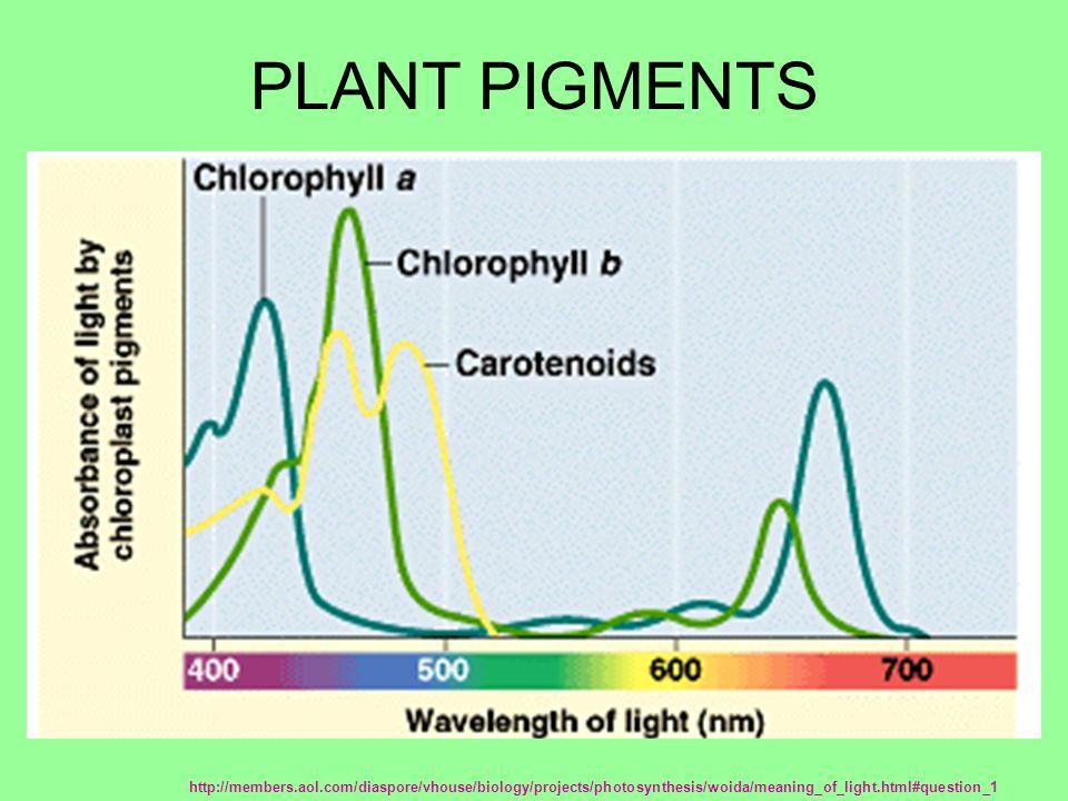 chromatography of photosynthetic pigments