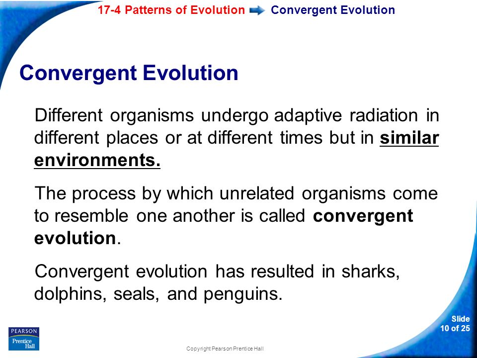 Slide 60 Of 60 Copyright Pearson Prentice Hall 60760 Patterns Of Amazing Section 174 Patterns Of Evolution