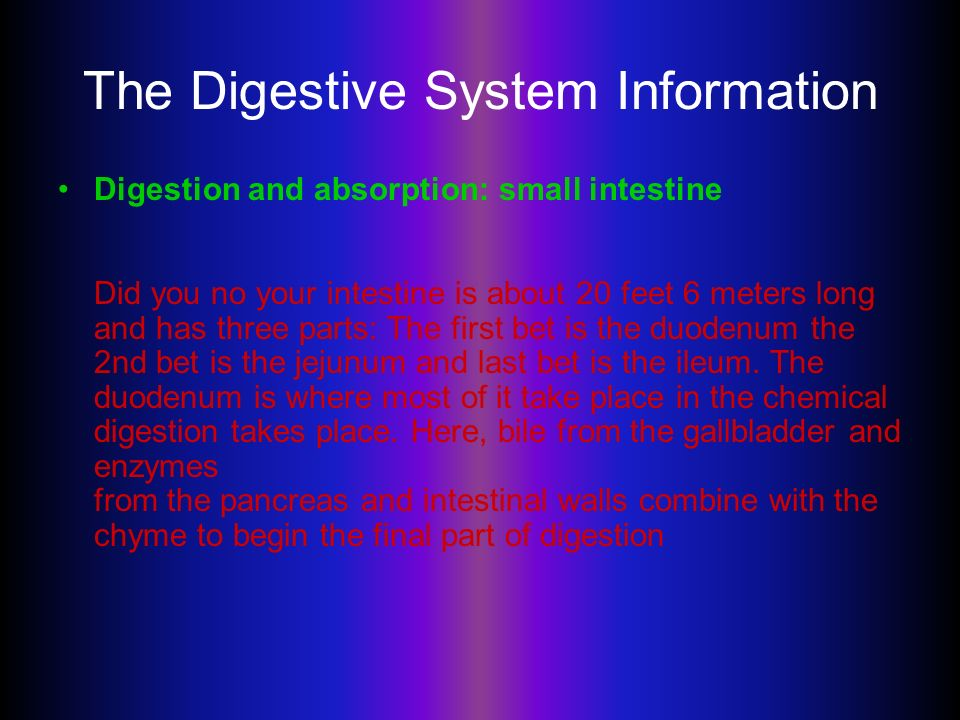 The Digestive System Information Digestion And Absorption Small