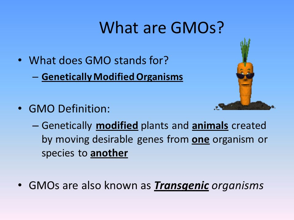 what are gmos essay What is a gmo gmos are organisms that have had their characteristics changed through the modification of their dna gmo stands for genetically modified organism genetically modified (gm) organisms are organisms that have had their genomes changed in a way that does not happen.