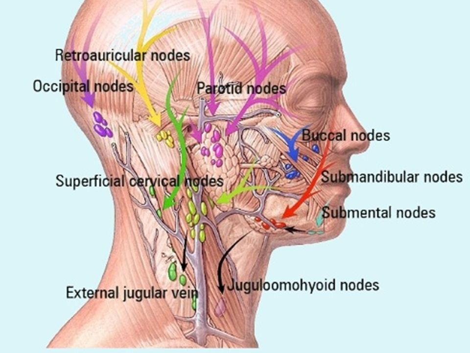 LYMPHATIC SYSTEM OF THE HEAD AND NECK. LYMPHATIC SYSTEM: includes ...