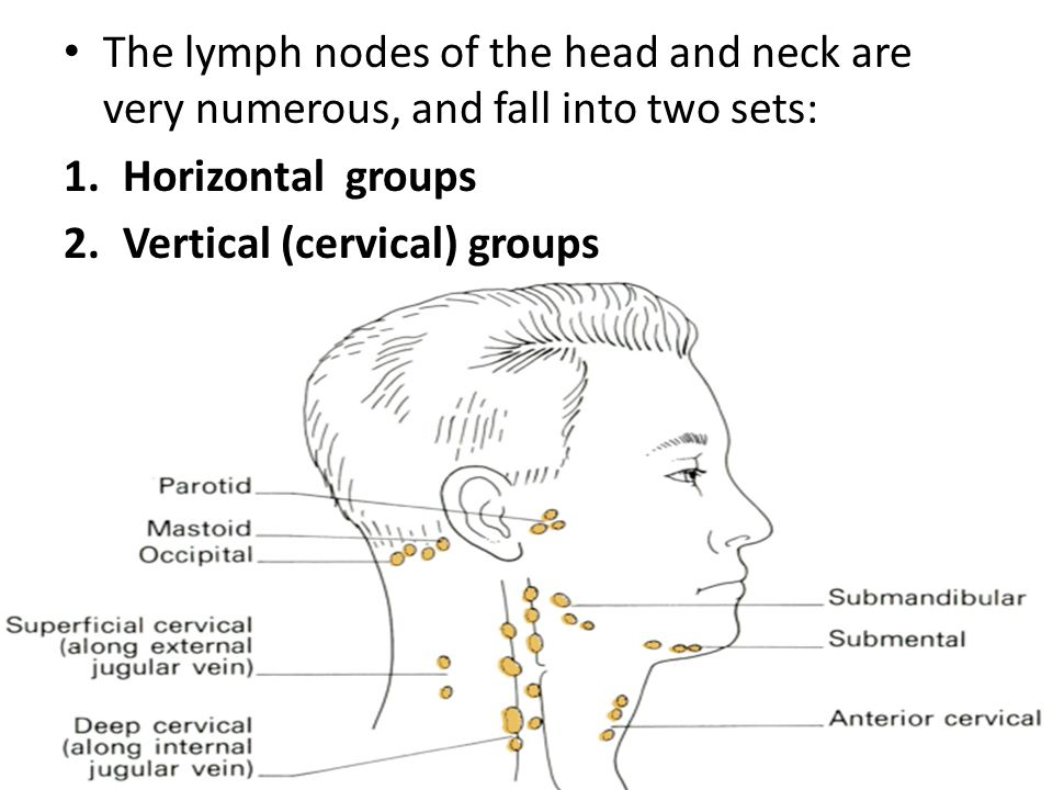 Lymphatic System Of The Head And Neck Lymphatic System Includes