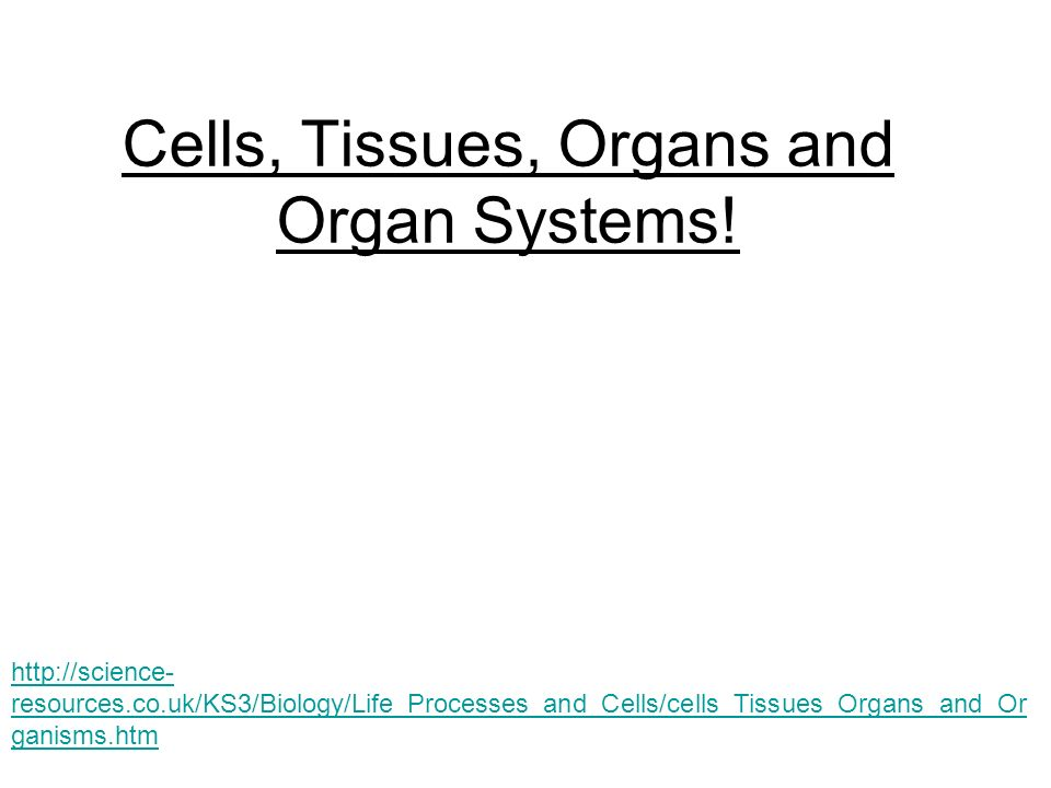 Cells tissues organs and organ systems resourcesks3 1 cells ccuart Image collections