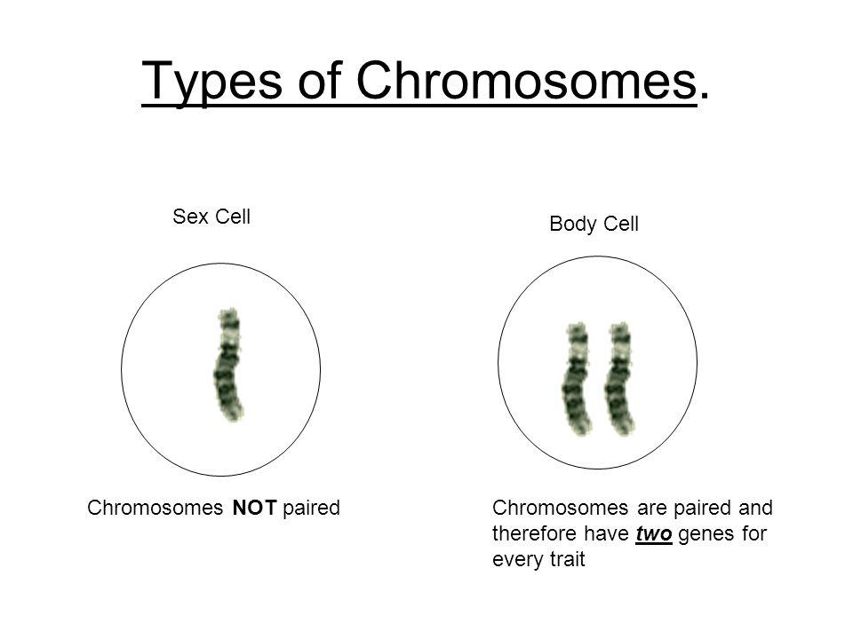 Chapter 26 Genetics Genes And Chromosomes Chromosome Genes Eye
