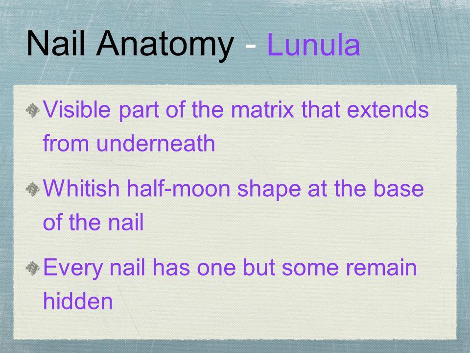 Ch 9 Nail Growth Structure The Natural Nail Onyx Natural Nail