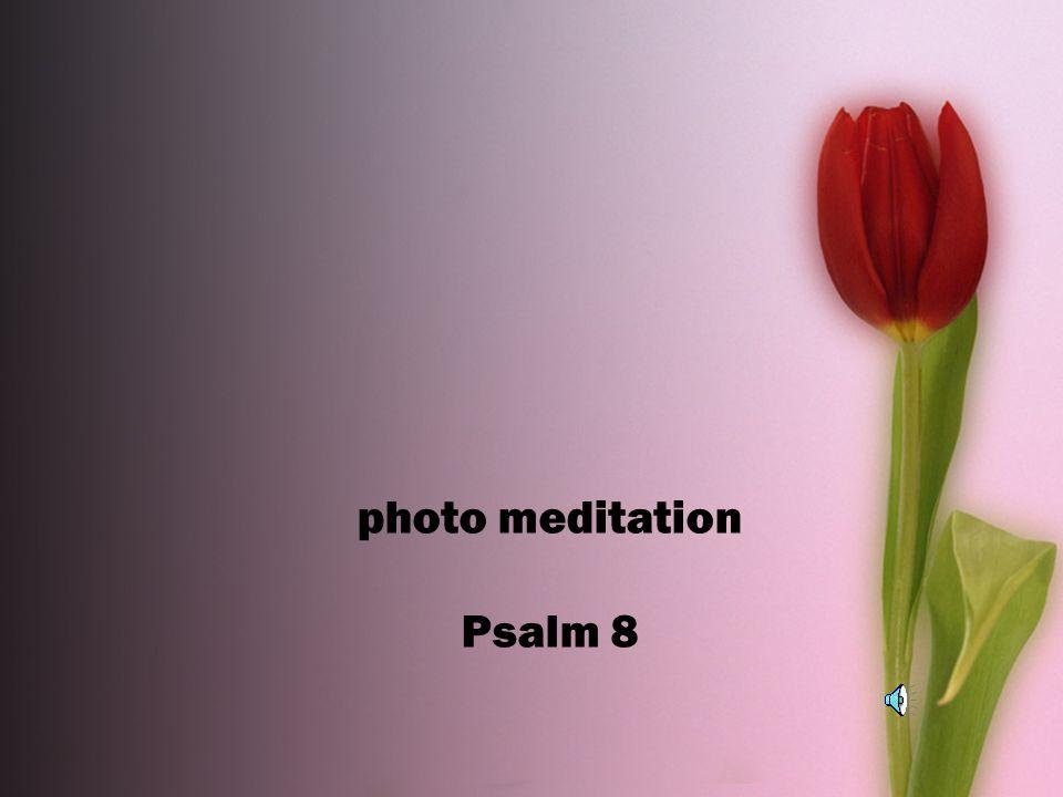 Photo meditation Psalm 8  The loving kindness of our God
