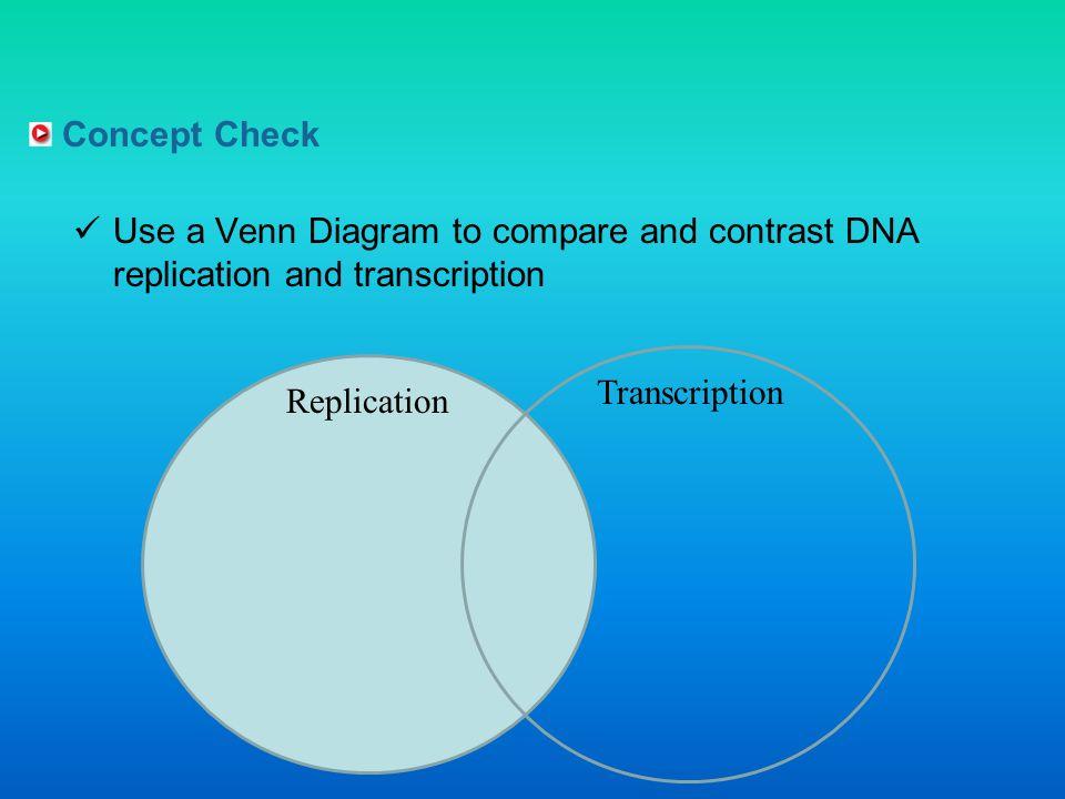 Replication Transcription Translation Venn Diagram Best Secret