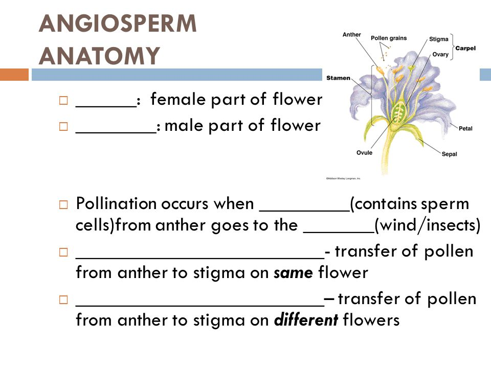 PLANTS – DAY 4 REPRODUCTIVE MECHANISMS. NATURAL REPRODUCTION – SEED ...