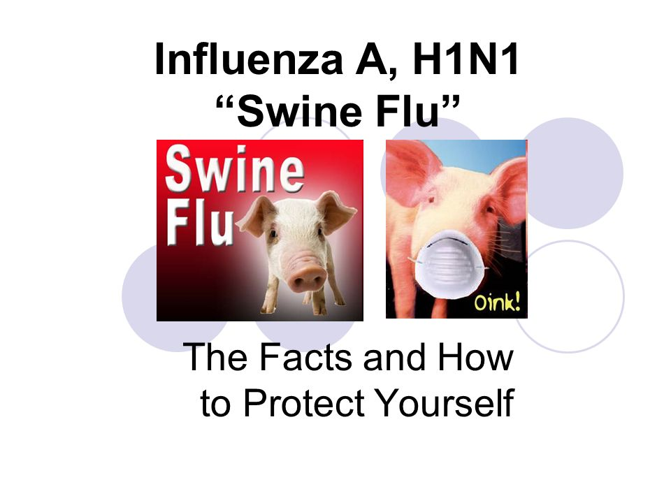 the swine flu Swine flu fears cause indian city of ahmedabad to ban public gatherings city of 35m will ot allow more than four people to meet in public in an attempt to stop spread of potentially deadly virus.