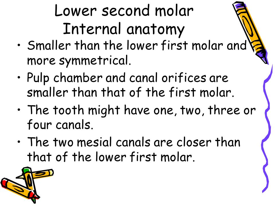 Mandibular Molars Root Anatomy and Access Cavities Dr. Mohammad ...