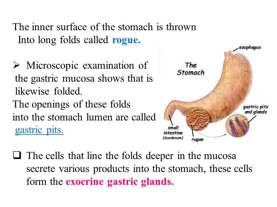 Gastric Secretion. Gastric secretion Gastric secretion (Gastric ...
