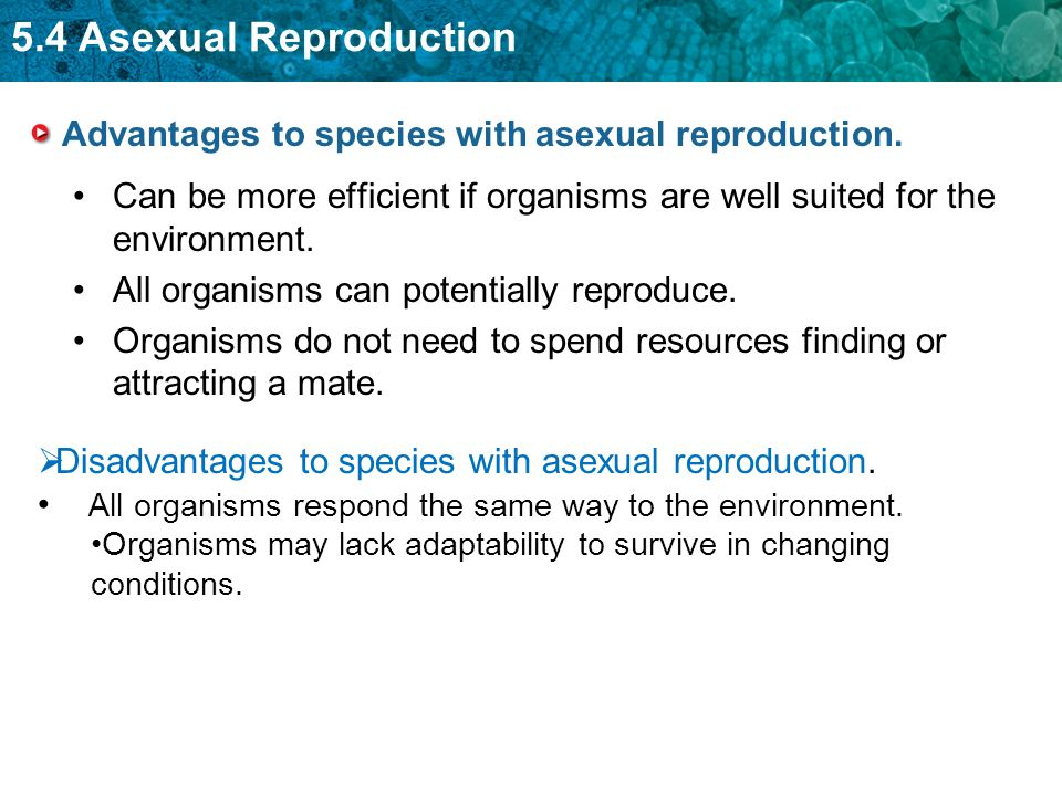 What is asexual reproduction advantageous meaning