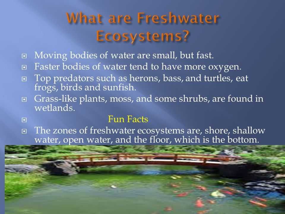 facts and information on fresh water ecosystems The questions on this worksheet and quiz will test you on what bodies of water make up freshwater ecosystems, the different zones found in them, and what kinds of predators live there quiz.