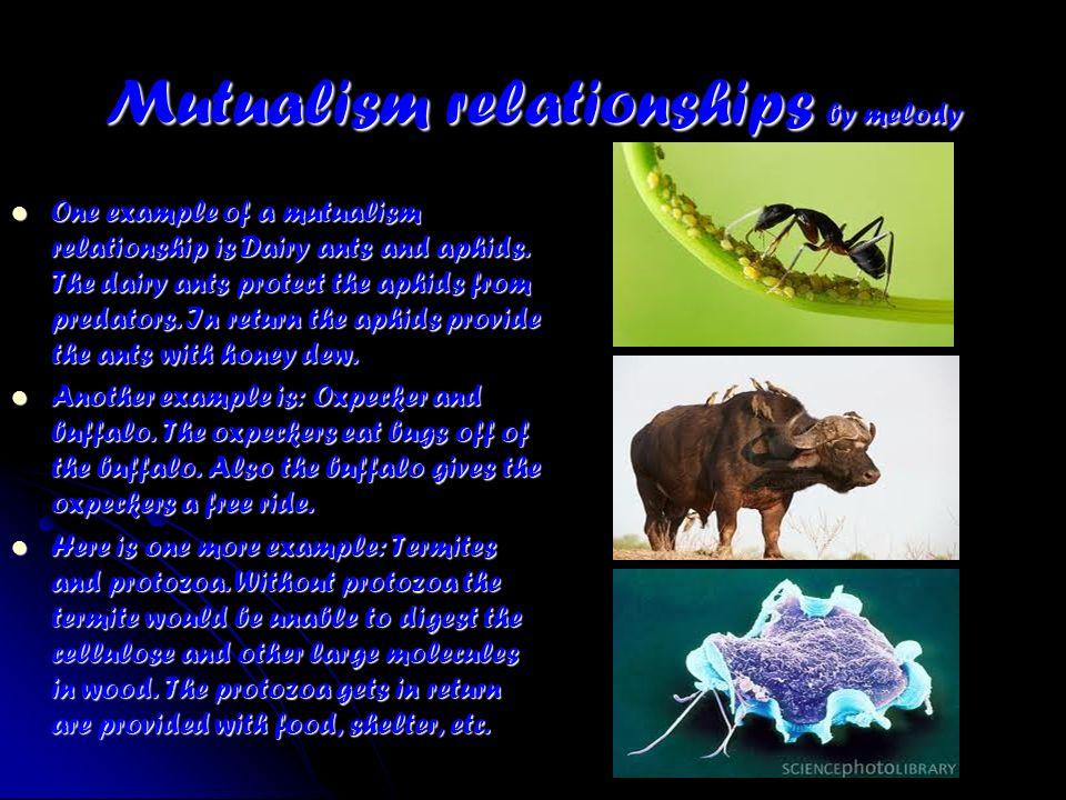 Symbiotic mutualism examples.