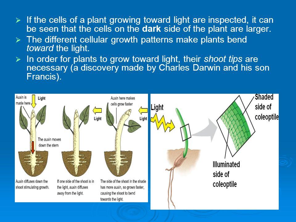 Plant Responses - Hormones Chapter 39    Plants, like