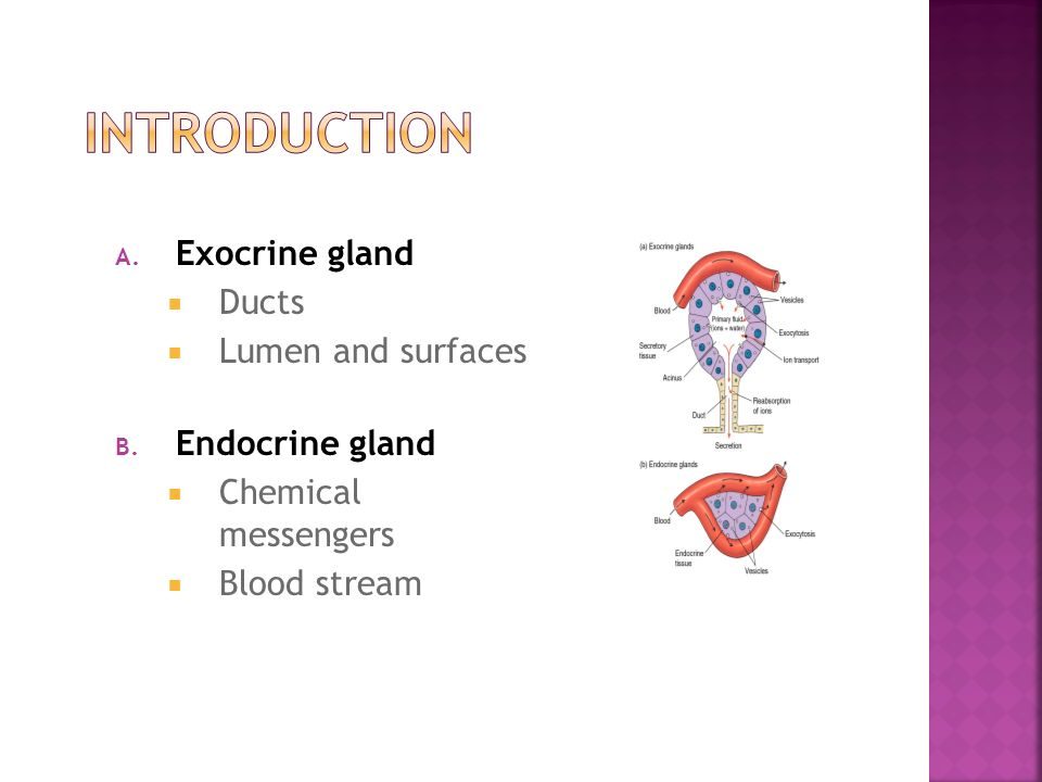 Dr Hana Alzamil King Saud University Endocrine Vs Exocrine