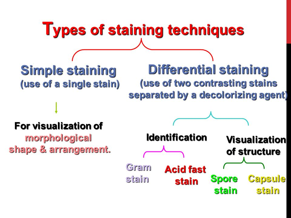 Topics Staining And Stain Staining And Stain Types Of Staining