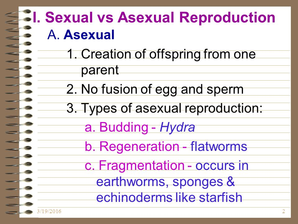 Fragmentation asexual reproduction in starfish jewelry