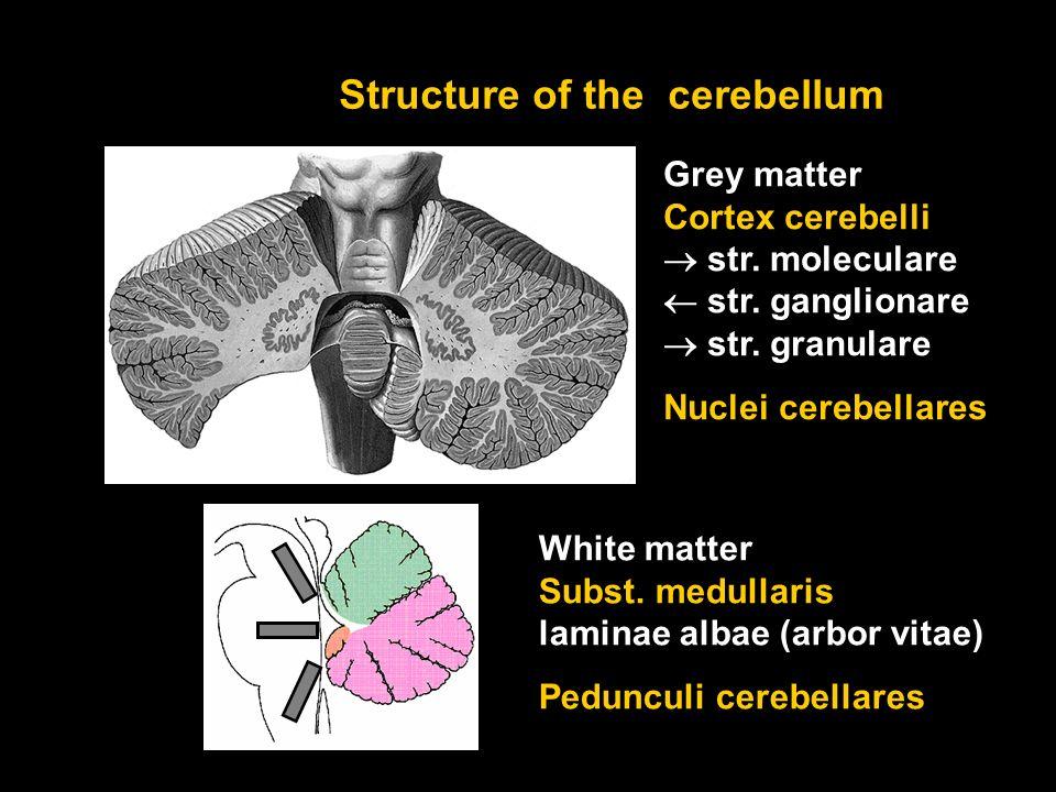 Coordination of movements Cerebellum. Vermis Hemispheres Folia ...