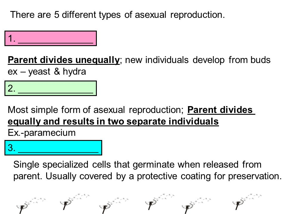 Mitosis related to asexual reproduction advantages