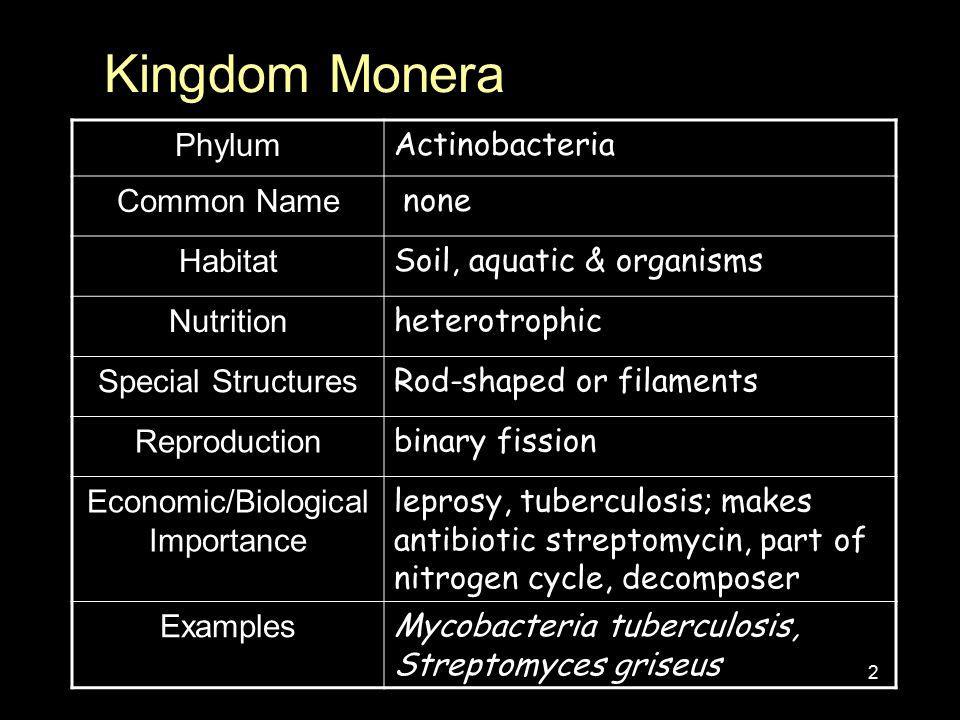 kingdom monera phylum