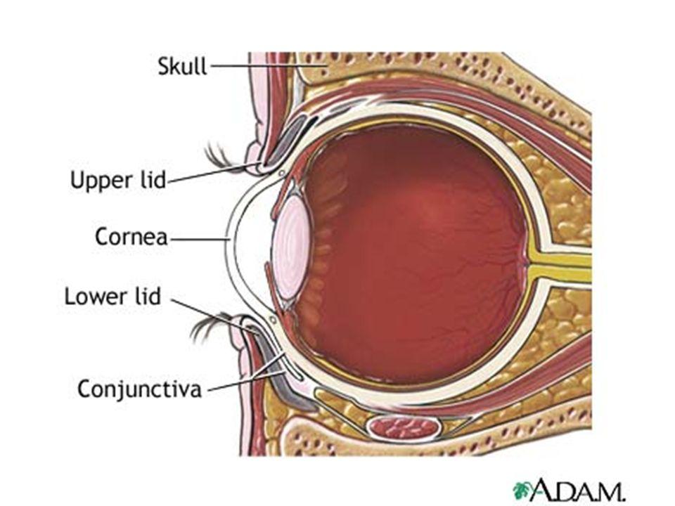 Gross Anatomy Of Eyeball Ppt Video Online Download