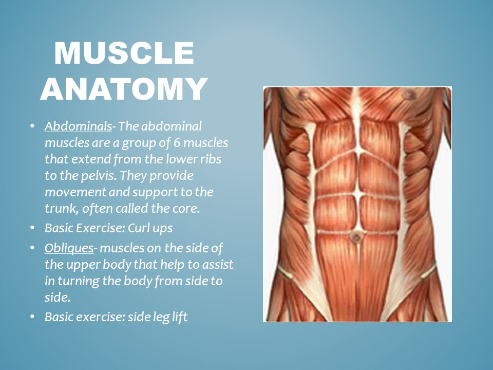 Muscle Anatomy Three Types Of Muscles 12 Basic Muscles Muscle