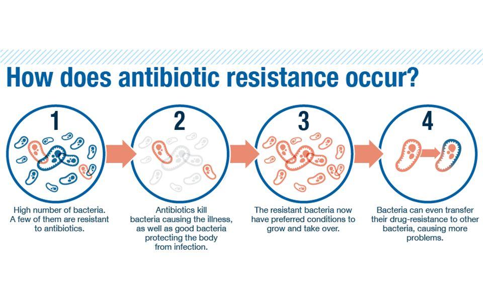 The Evolution of Antibiotic Resistance November 19/ ppt download